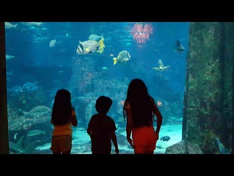 The Lost Chambers Aquarium Dubai we saw Nemo  رحنا عالم الأسماك في دبي شفنا نيمو ودوري 🐠🐟