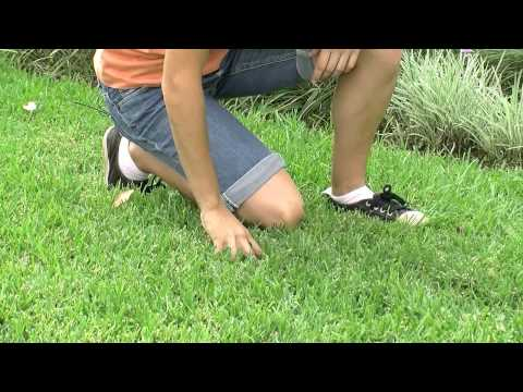 Watering And Fertilising Tips For Your Lawn | Free Download