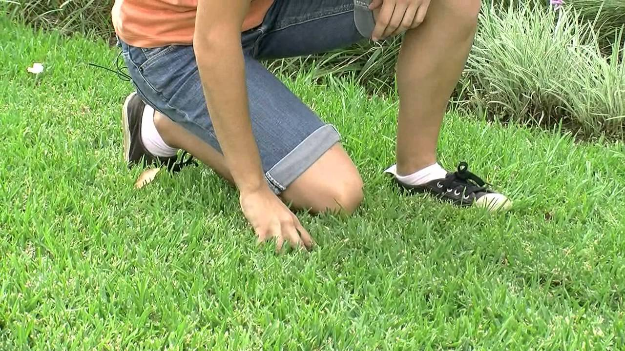 Watering and fertilising tips for your lawn free down for How often should you mow your lawn