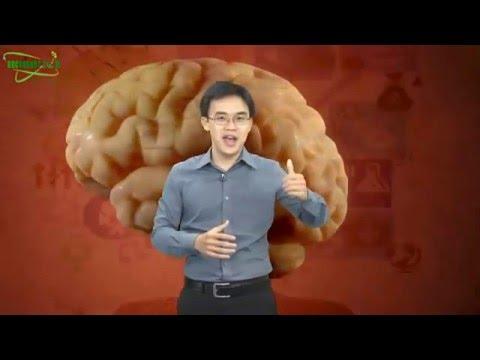 Cách Kích Hoạt Não Để Học & Làm Việc Hiệu Quả Gấp Nhiều Lần