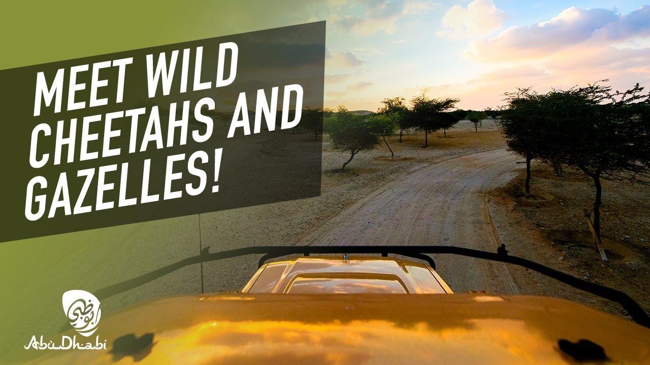 Feel the call of the wild on Sir Bani Yas Island