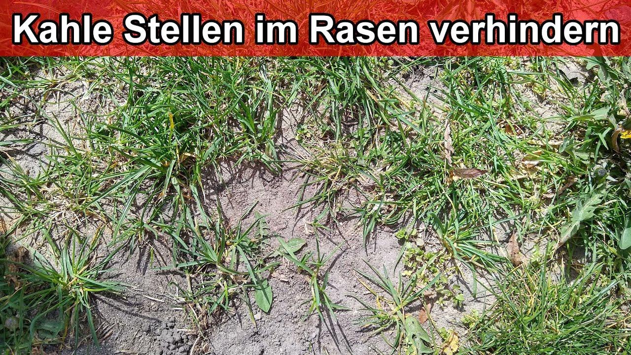 Kahle Stellen Im Rasen Ursache