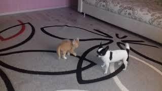 Кошки и собаки. Есть ли дружба. Приколы. Игра
