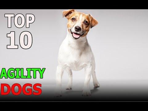 Top 10 Agility