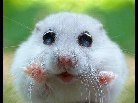 Милые хомячки!!! - YouTube