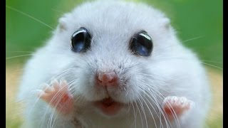 Милые хомячки!!!