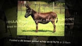 2015 Foaling Season at Half Ass Acres