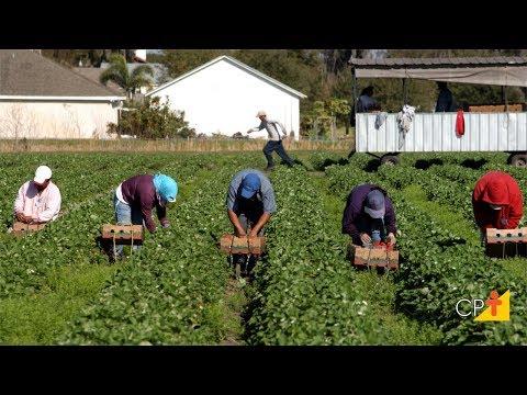 Clique e veja o vídeo Curso Como Montar uma Cooperativa de Trabalhadores Rurais