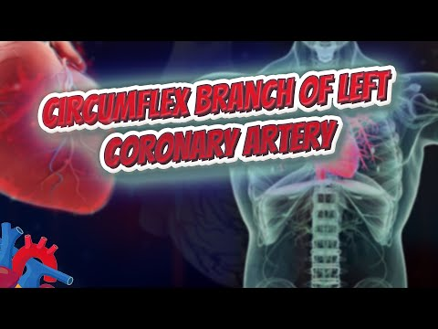 Circumflex branch of left coronary artery - Human Heart ❤️ and Cardiology ❤️🔊✅