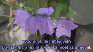 Szécsi Pál-Egy szál harangvirág DEMO Karaoke