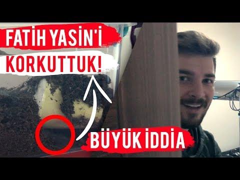 FATİH YASİN'İ KORKUTTUK! (BÜYÜK İDDİA!) ft. KAYA GİRAY