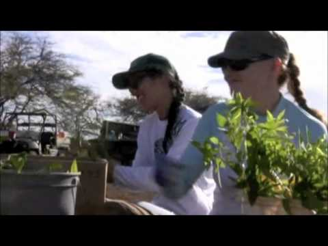 Four Seasons planting trees on Kahoolawe