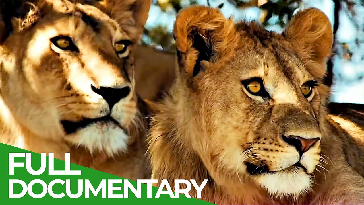 Wildlife Laws: The Better Hunter Wins   Free Documentary Nature