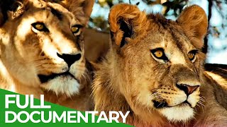 Wildlife Laws: The Better Hunter Wins | Free Documentary Nature