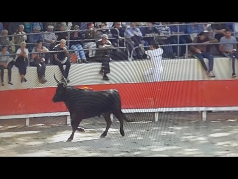 Sommieres-Royale Ricard-Course camarguaise As-complete-29/05/2016
