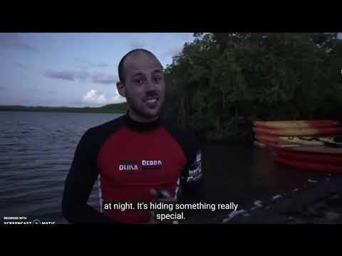 A Tour Of A Bioluminescent Bay In Puerto Rico
