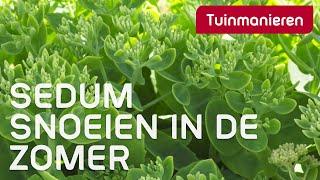 Sedum snoeien in de zomer? Hoe doe je dat? | Tuinmanieren