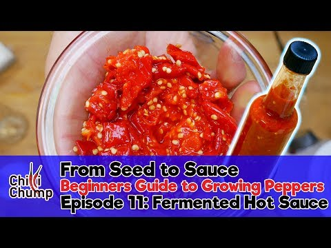 Episode 11: Making a fermented hot sauce (Beginners Guide to Growing Peppers)