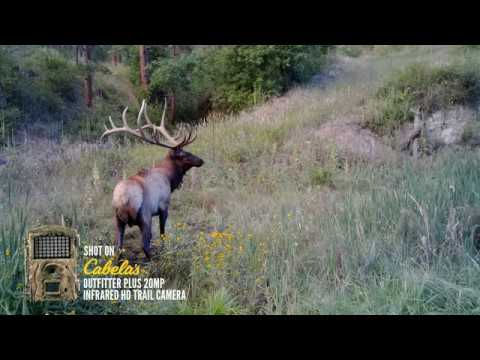 Actual Wild Game Footage | Outfitter Plus 20 MP Infrared HD Trail Camera
