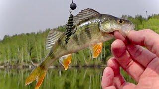 Тестирую новый дешевый силикон Рыбалка на спиннинг