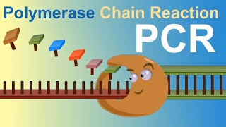 PCR - Polymerase Chain Reaction (IQOG-CSIC)
