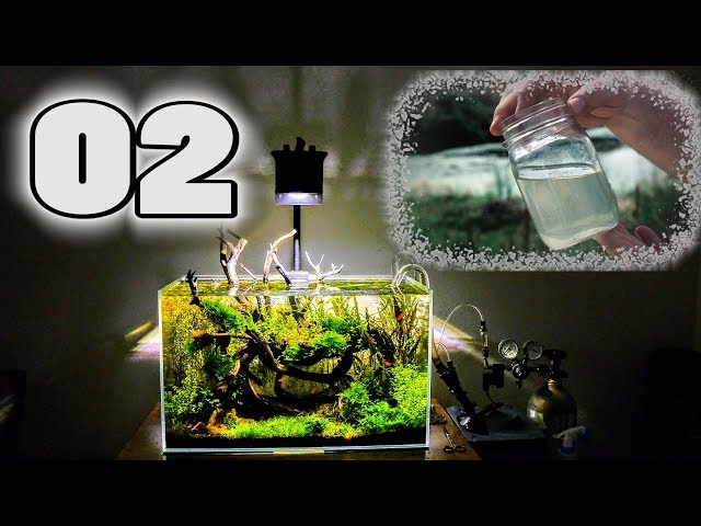 Optimizing Your Water Quality | Surface Scum & Filtration | Aquascaping