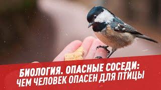 Биология Опасные соседи чем человек опасен для птицы Школьная программа для взрослых
