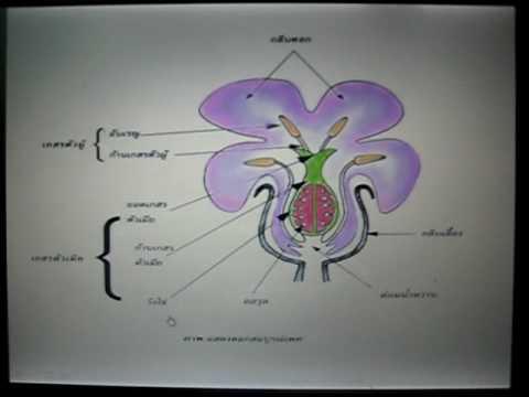 วิทยาศาสตร์การสืบพันธุ์ของพืช