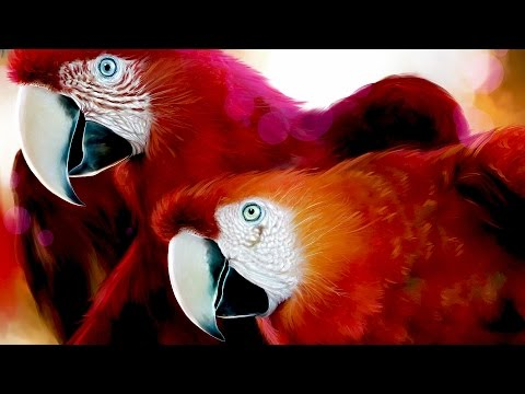 Как целуютя попугаи Ара. Красный АРА (Ара Макао)