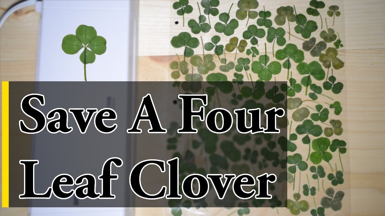 How To Save A Four Leaf Clover Youtube