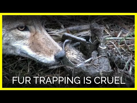 Fur Trapping Is Cruel!