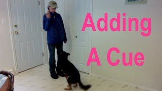 How to Add a Cue to a Known Behavior in Positive Reinforcement Dog Training