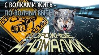 Дорожные аномалии. С волками жить - по-волчьи выть...