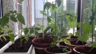 Маленькие хитрости : балкон для растений и хранений продуктов.