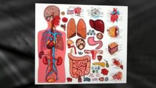 Diagram of the Human Body Organs