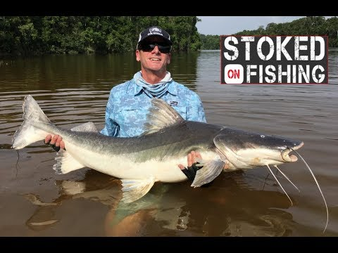 Fishing the Amazon | Acute Angling Species Trip | Part 1 Mp3