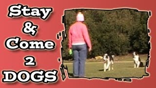 Stay & Recall With Two Dogs - Clicker Dog Training