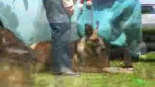 German Shepherd Rescue - Party 2006