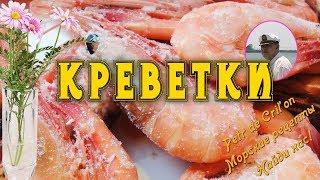 Креветки видео от Petr de Cril'on(Креветки http://www.qingdao.su/eda/krivetki/ , травяной шримс, чилимы, рачки -- все это представляет собой морские деликатесы..., 2014-01-15T04:34:39.000Z)