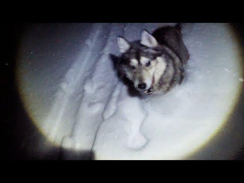 УЖАС !  Волки прогнали с реки . Рыбалка на налима