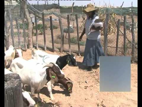 Health Authorities assure the nation Crimean-Congo fever under control-NBC