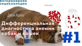 Дифференциальная диагностика анемии собак и кошек. Часть 1