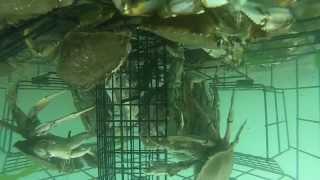 GoPro Underwater Crab Trap / Crab Net