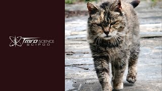SciPod: Calculating counts of cats in crisis