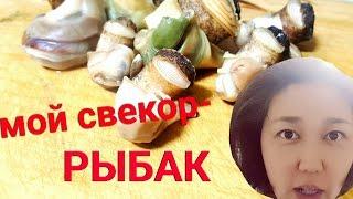 МОЙ СВЕКОР- РЫБАК. Едим моллюсков!