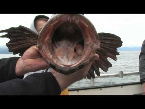 Alaska Fishing at Cove Lodge in Elfin Cove