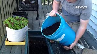 Growing Beans Without Ground - In Containers - Quick Tip