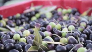 Adopt an olive tree in Italy - Official Video http://adopt.byitaly.com