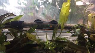 Выделение кислорода в аквариуме