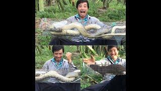 Tập 37 - thăm bẫy rắn bẫy được hổ trâu khủng 3kg5 và con chồn khủng, #37 - Tiến.